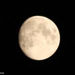 Newton Grove CL Moon Megz photography South Newington