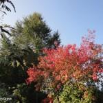 Newton Grove CL Autumn and moon South Newington