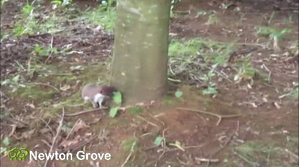 Stoat Video front page